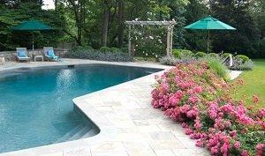 swimming pool flowering plants